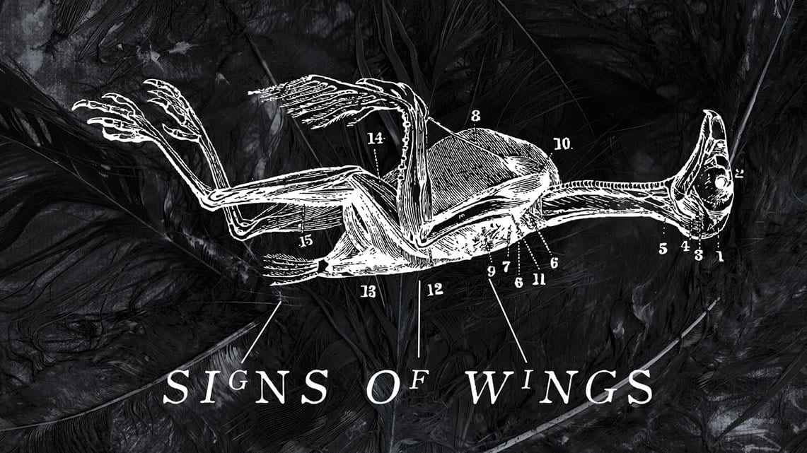 Sascha Paeth's Masters of Ceremony: Signs of Wings // Frontiers Music